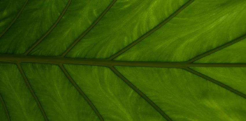 أسرار تنفس النبات