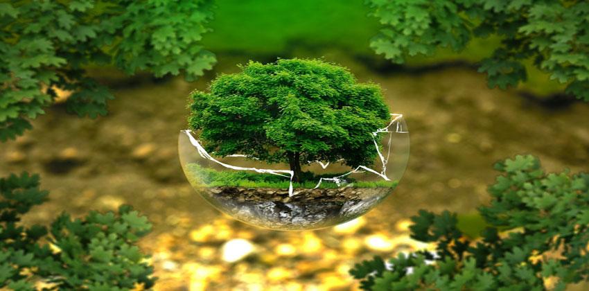 مبادرات الحفاظ على النظم البيئية
