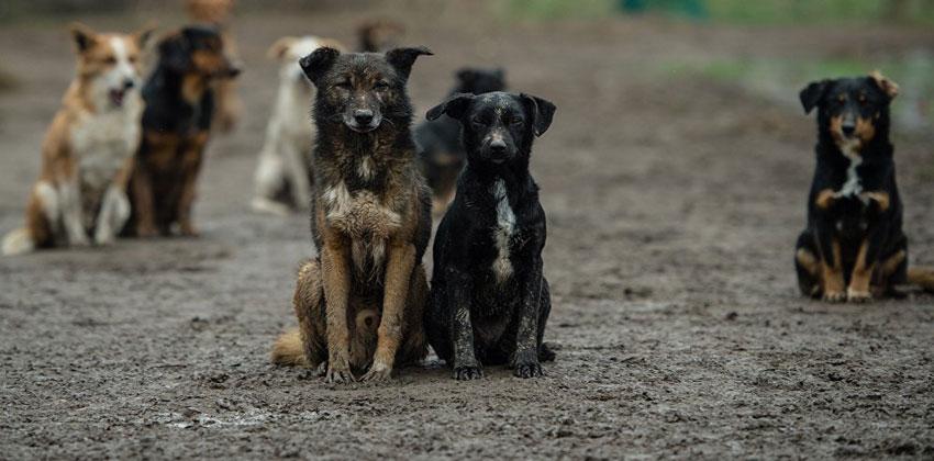 أخطر 3 أمراض تصيب الحيوانات والبشر