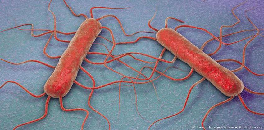 هل تصبح البكتيريا مصدراً للطاقة؟