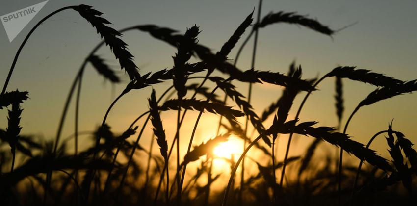 الزراعة في روسيا